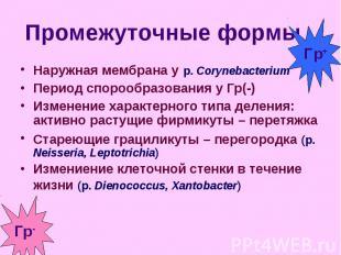 Наружная мембрана у р. Cоrynebacterium Наружная мембрана у р. Cоrynebacterium Пе
