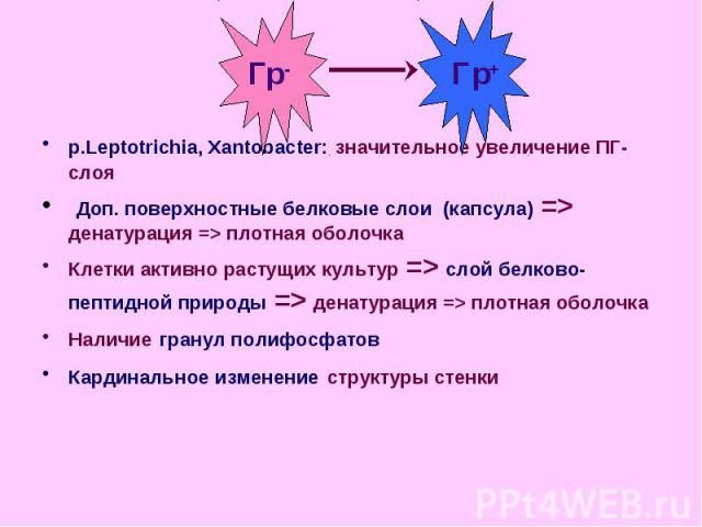 p.Leptotrichia, Xantobacter: значительное увеличение ПГ-слоя p.Leptotrichia, Xantobacter: значительное увеличение ПГ-слоя Доп. поверхностные белковые слои (капсула) => денатурация => плотная оболочка Клетки активно растущих культур => слой …