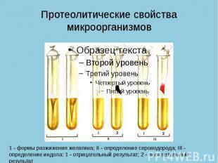 Протеолитические свойства микроорганизмов