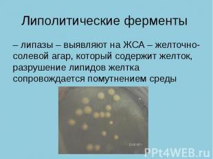 Липолитические ферменты – липазы – выявляют на ЖСА – желточно- солевой агар, кот