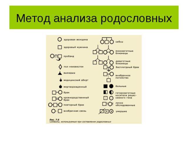 генеалогический метод разбор заданий фототерапевтический ОФТН