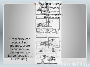 Эксперимент с вороной по оперированию эмпирической размерностью фигур (рисунок Т