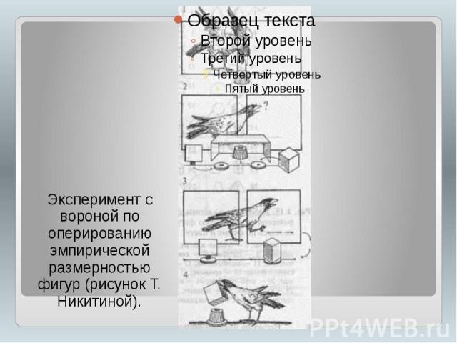 Эксперимент с вороной по оперированию эмпирической размерностью фигур (рисунок Т. Никитиной).