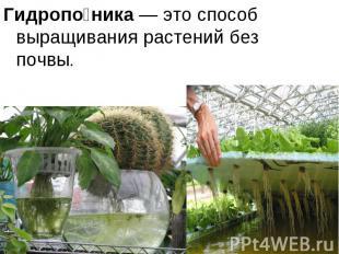 Гидропо ника— это способ выращивания растений без почвы.