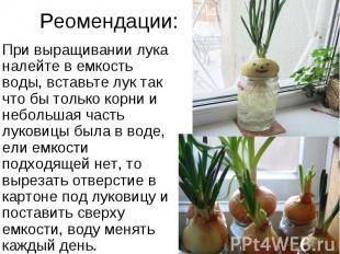 Реомендации: При выращивании лука налейте в емкость воды, вставьте лук так что б