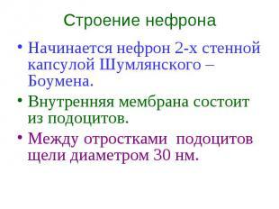 Строение нефрона Начинается нефрон 2-х стенной капсулой Шумлянского – Боумена. В