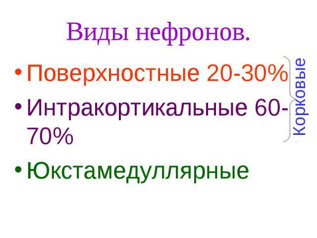 Виды нефронов. Поверхностные 20-30% Интракортикальные 60-70% Юкстамедуллярные