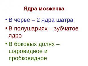 В черве – 2 ядра шатра В черве – 2 ядра шатра В полушариях – зубчатое ядро В бок