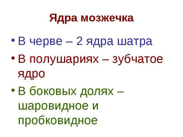 В черве – 2 ядра шатра В черве – 2 ядра шатра В полушариях – зубчатое ядро В боковых долях – шаровидное и пробковидное