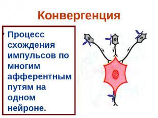 Конвергенция Процесс схождения импульсов по многим афферентным путям на одном не