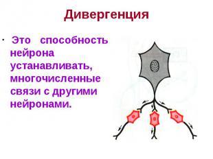 Дивергенция Это способность нейрона устанавливать, многочисленные связи с другим