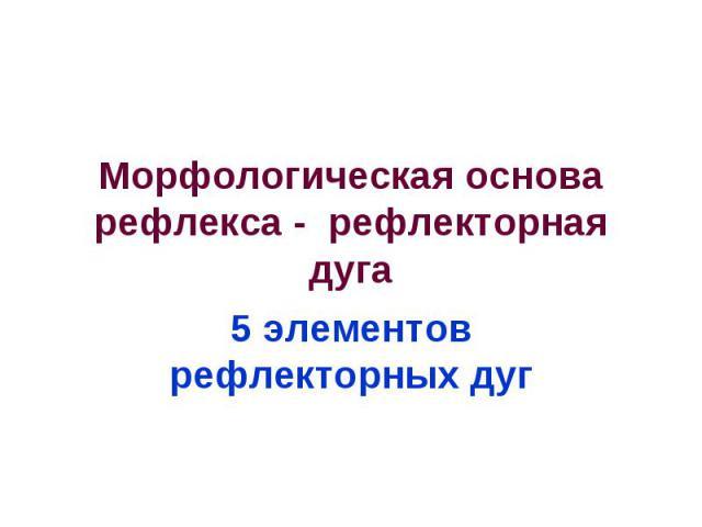 Морфологическая основа рефлекса - рефлекторная дуга 5 элементов рефлекторных дуг