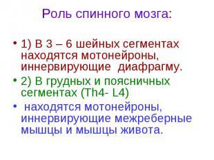 Роль спинного мозга: 1) В 3 – 6 шейных сегментах находятся мотонейроны, иннервир