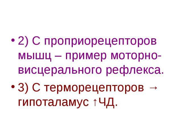2) С проприорецепторов мышц – пример моторно-висцерального рефлекса. 3) С терморецепторов → гипоталамус ↑ЧД.