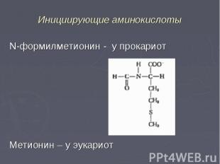 N-формилметионин - у прокариот N-формилметионин - у прокариот Метионин – у эукар