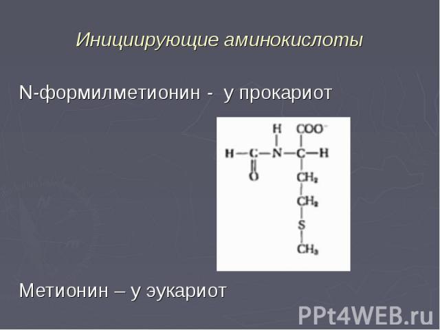 N-формилметионин - у прокариот N-формилметионин - у прокариот Метионин – у эукариот