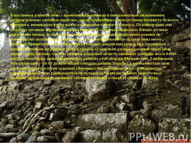 В восточных районах зоны с временно избыточным и поверхностным увлажнением распространены «луговые подбелы», характеризующиеся присутствием мучнисто-белесого горизонта, возникшего в результате элювиально-глеевого процесса. По плодородию они уступают…