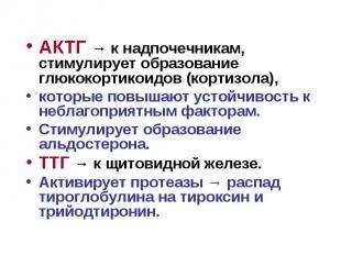 АКТГ → к надпочечникам, стимулирует образование глюкокортикоидов (кортизола), АК