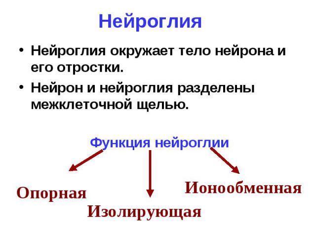 Нейроглия Нейроглия окружает тело нейрона и его отростки. Нейрон и нейроглия разделены межклеточной щелью.