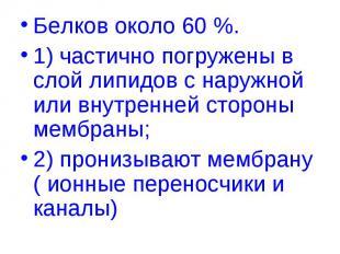 Белков около 60 %. Белков около 60 %. 1) частично погружены в слой липидов с нар
