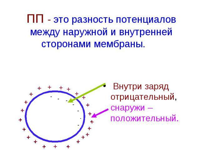 ПП - это разность потенциалов между наружной и внутренней сторонами мембраны. Внутри заряд отрицательный, снаружи – положительный.