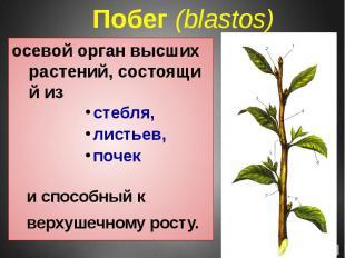 Побег(blastos) осевой орган высших растений, состоящий из стебля, ли