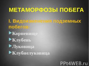 МЕТАМОРФОЗЫ ПОБЕГА I. Видоизменения подземных побегов: Корневище Клубень Луковиц