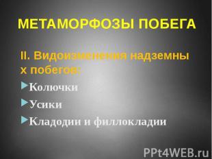 МЕТАМОРФОЗЫ ПОБЕГА II. Видоизменения надземных побегов: Колючки Усики Кладодии и
