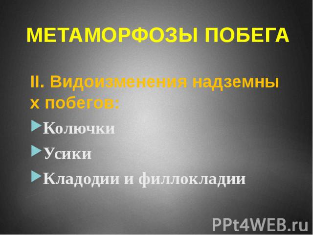 МЕТАМОРФОЗЫ ПОБЕГА II. Видоизменения надземных побегов: Колючки Усики Кладодии и филлокладии