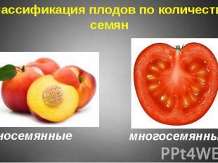 Классификация плодов по количеству семян