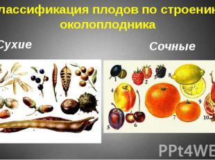 Классификация плодов по строению околоплодника