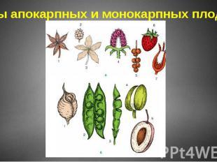 Типы апокарпных и монокарпных плодов