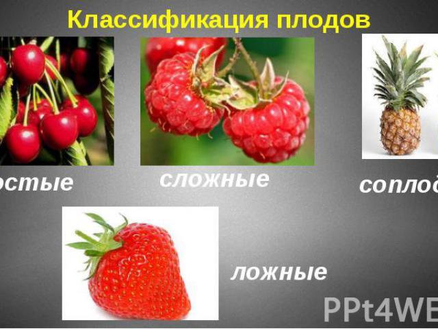 Классификация плодов