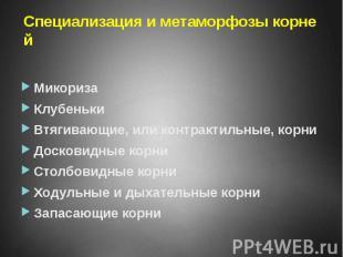 Специализация и метаморфозы корней Микориза Клубеньки Втягивающие, или контракти