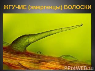 ЖГУЧИЕ (эмергенцы) ВОЛОСКИ
