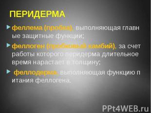 ПЕРИДЕРМА феллема (пробка), выполняющая главные защитные функции; феллоген (проб