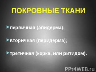 первичная (эпидерма); вторичная (перидерма); третичная (корка, или ритидом).