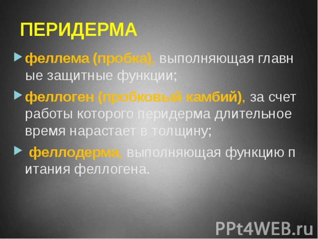 ПЕРИДЕРМА феллема (пробка), выполняющая главные защитные функции; феллоген (пробковый камбий), за счет работы которого перидерма длительное время нарастает в толщину; феллодерма, выполняющая функцию питания феллогена.