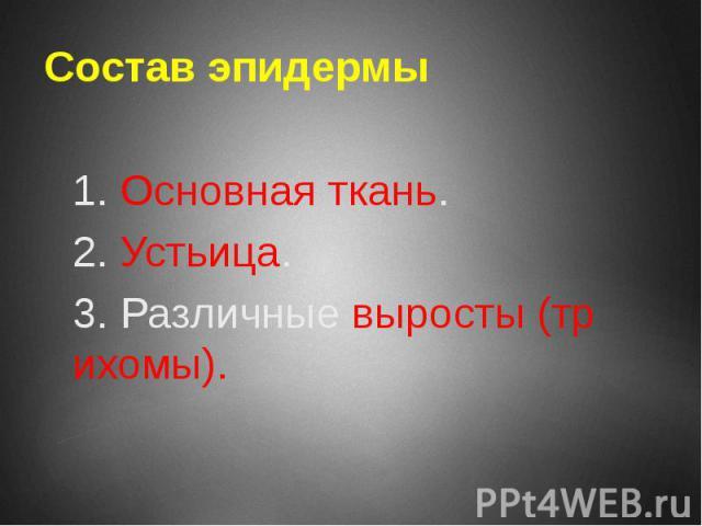 Состав эпидермы 1. Основная ткань. 2. Устьица. 3. Различные выросты (трихомы).