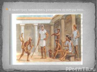 В палестрах занимались развитием культуры тела. В палестрах занимались развитием