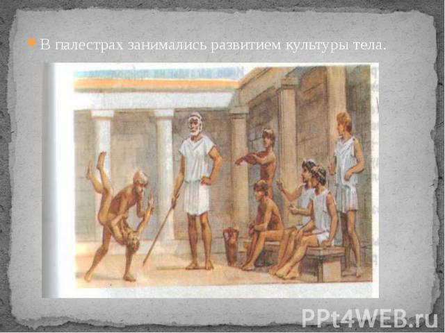 В палестрах занимались развитием культуры тела. В палестрах занимались развитием культуры тела.
