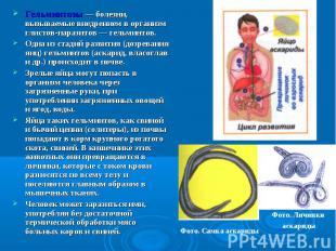 Гельминтозы — болезни, вызываемые внедрением в организм глистов-паразитов — гель