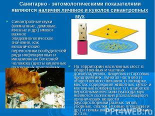 Санитарно - энтомологическими показателями являются наличия личинок и куколок си