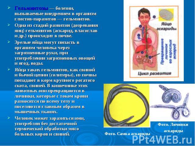Гельминтозы — болезни, вызываемые внедрением в организм глистов-паразитов — гельминтов. Гельминтозы — болезни, вызываемые внедрением в организм глистов-паразитов — гельминтов. Одна из стадий развития (дозревания яиц) гельминтов (аскарид, власоглав и…