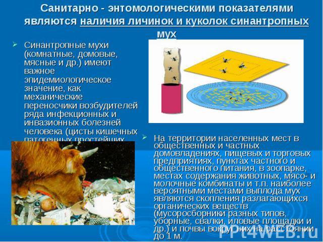Санитарно - энтомологическими показателями являются наличия личинок и куколок синантропных мух Синантропные мухи (комнатные, домовые, мясные и др.) имеют важное эпидемиологическое значение, как механические переносчики возбудителей ряда инфекционных…
