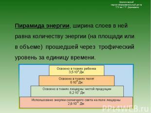 Пирамида энергии, ширина слоев в ней равна количеству энергии (на площади или в