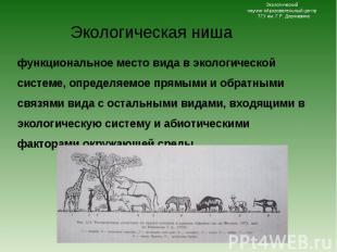 функциональное место вида в экологической системе, определяемое прямыми и обратн