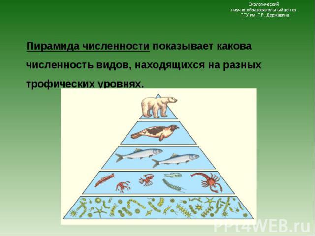 Пирамида численности показывает какова численность видов, находящихся на разных трофических уровнях. Пирамида численности показывает какова численность видов, находящихся на разных трофических уровнях.