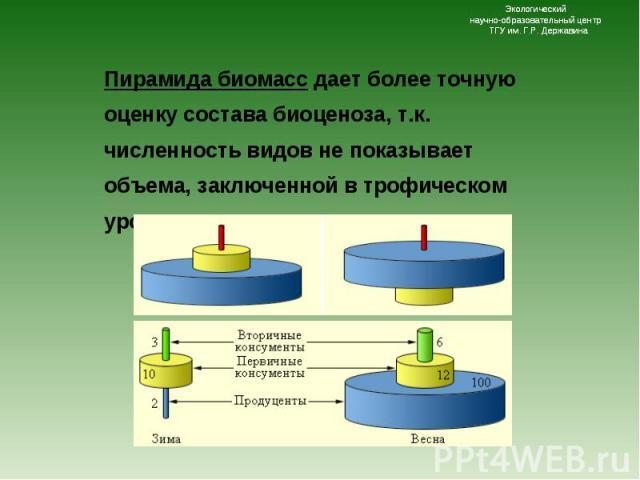 Пирамида биомасс дает более точную оценку состава биоценоза, т.к. численность видов не показывает объема, заключенной в трофическом уровне вещества и энергии. Пирамида биомасс дает более точную оценку состава биоценоза, т.к. численность видов не пок…