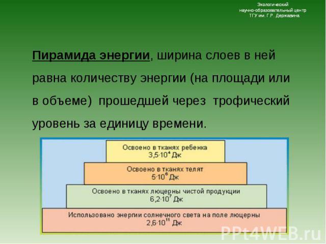 Пирамида энергии, ширина слоев в ней равна количеству энергии (на площади или в объеме) прошедшей через трофический уровень за единицу времени. Пирамида энергии, ширина слоев в ней равна количеству энергии (на площади или в объеме) прошедшей через т…